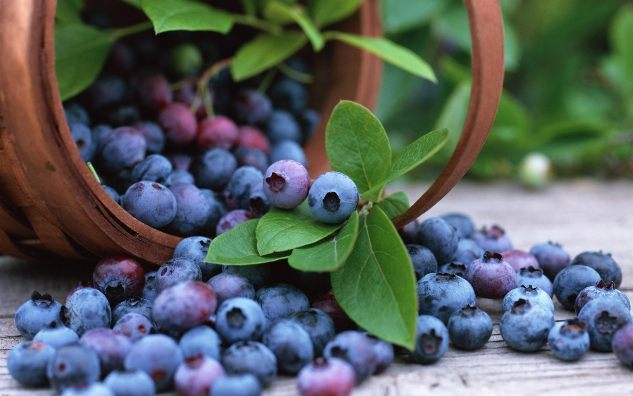 HD Wallpaper | Background ID:381349. 2560x1600 Food Blueberry