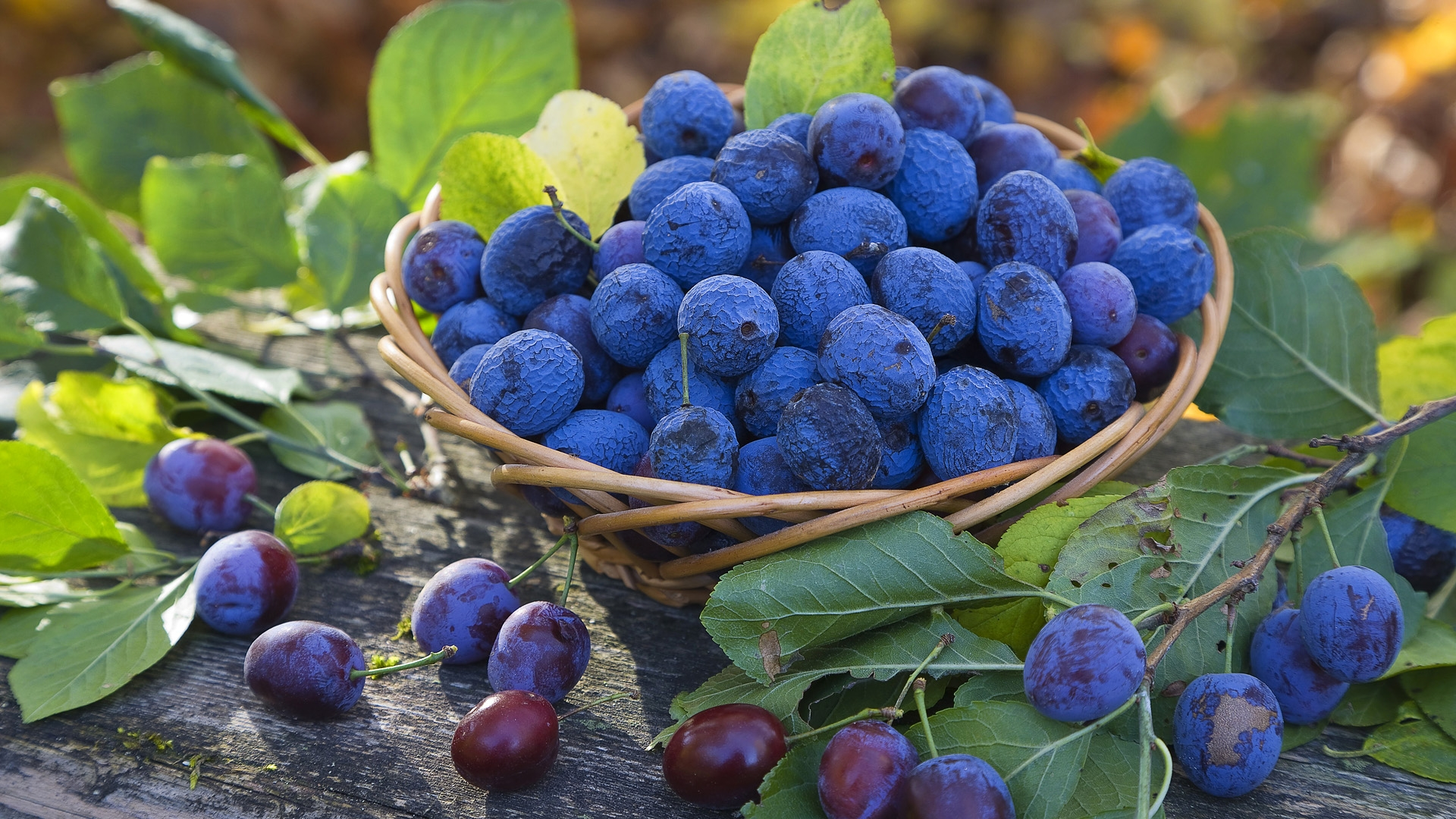 Blueberry Pictures