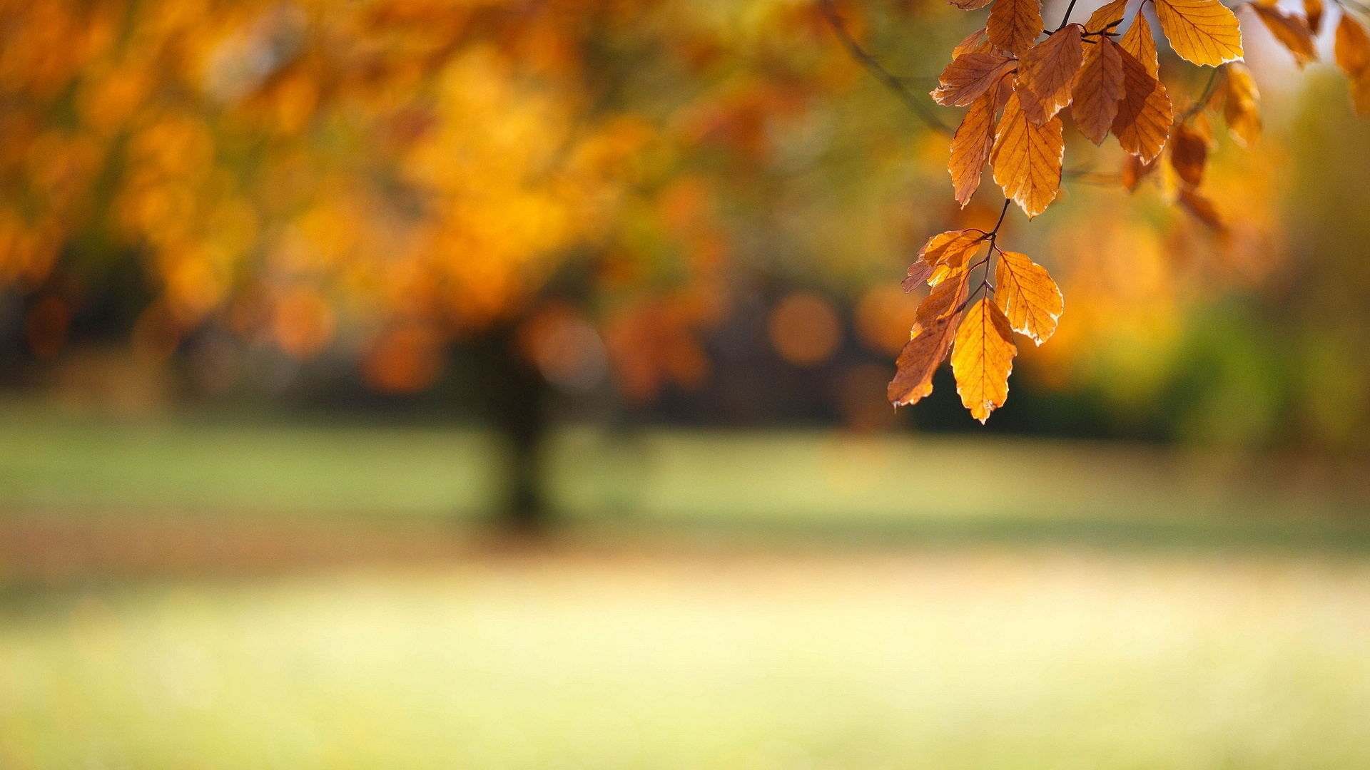 Blurred autumn Wallpaper in 1920x1080 HD Resolutions