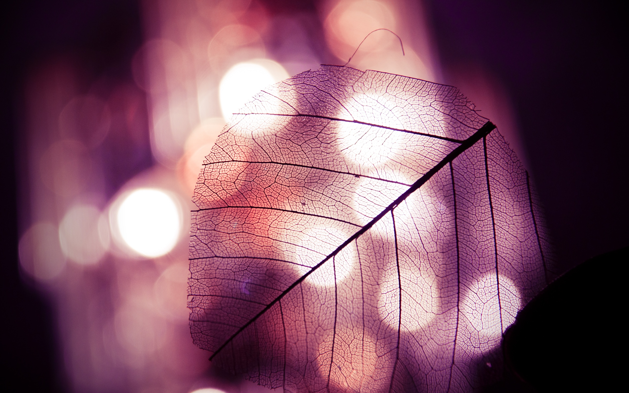 Bokeh transparent leave