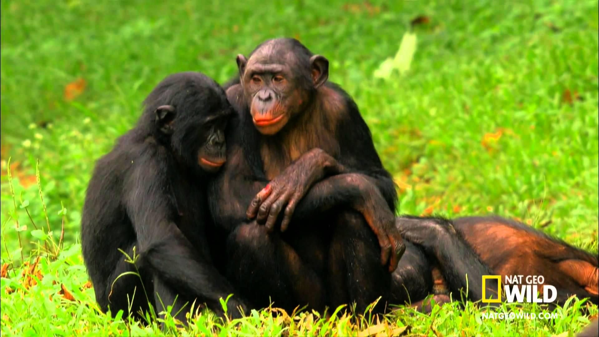 Секс обезьяна и человек 20 фотография