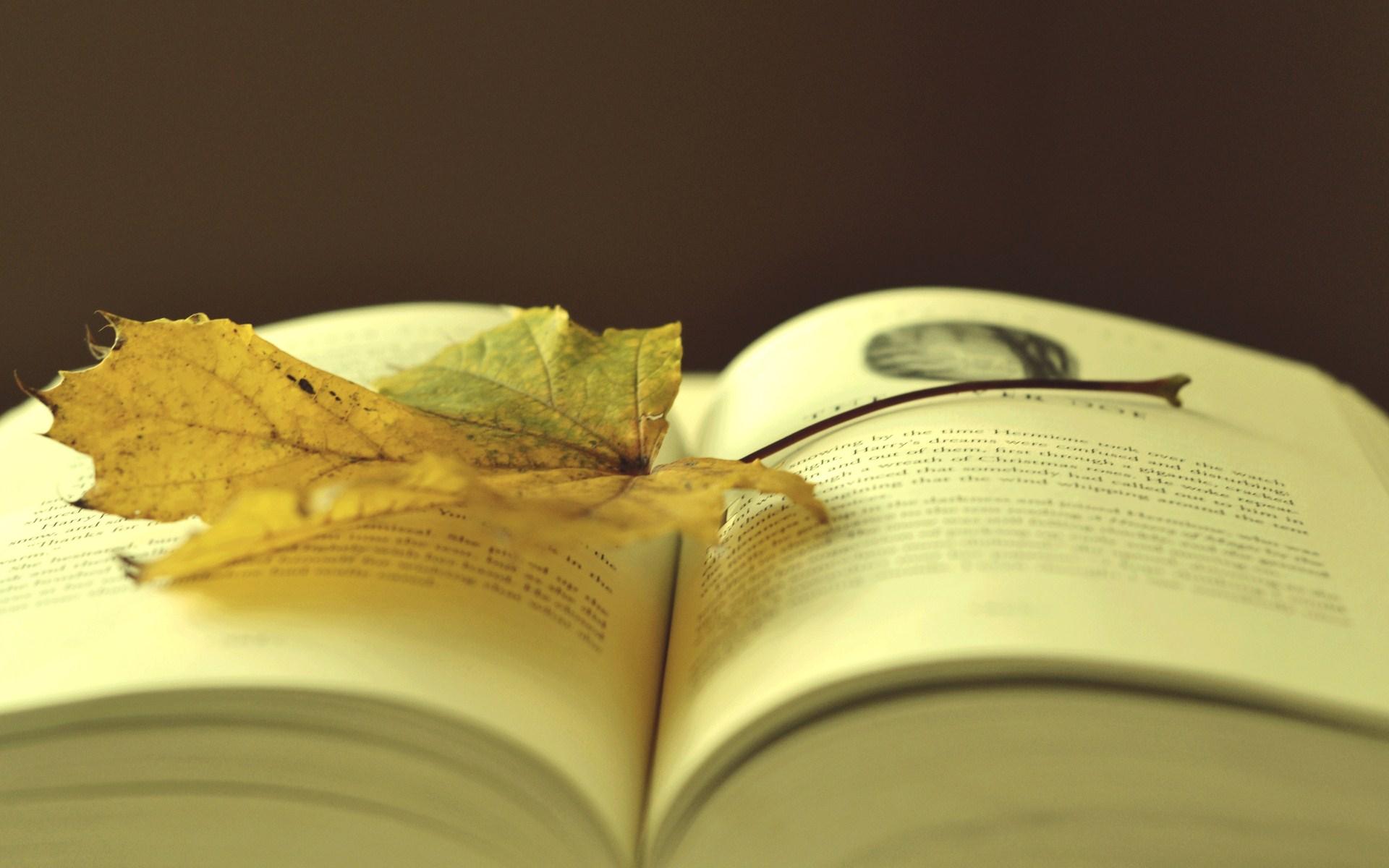 Yellow Leaf Book Autumn Photo HD Wallpaper