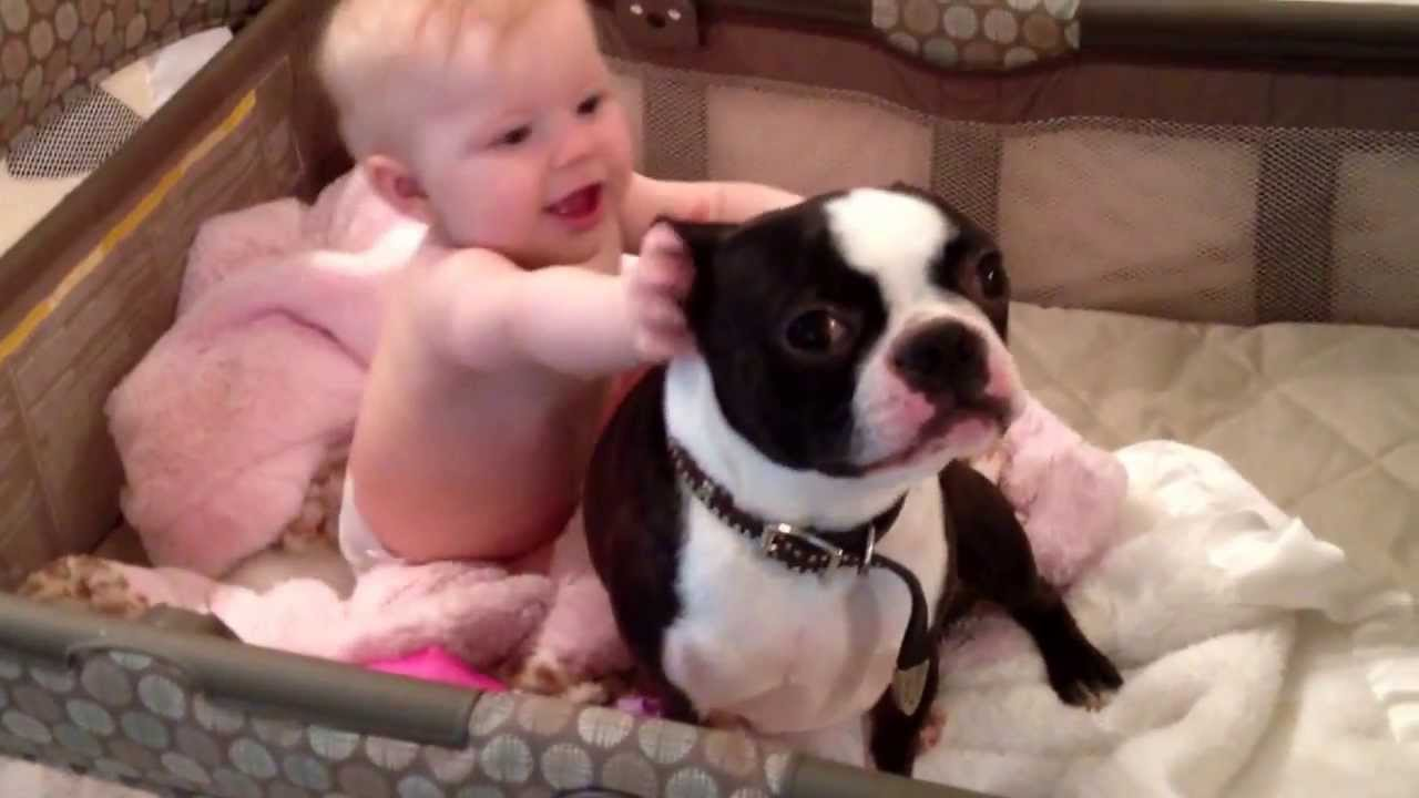 Crazy Boston terrier in baby's crib! Must see!