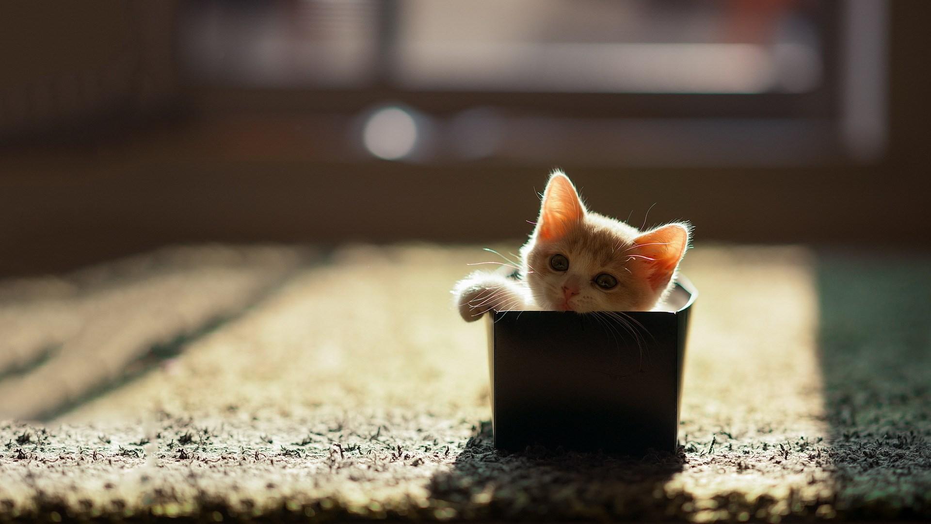 Box Cat HD Wallpaper