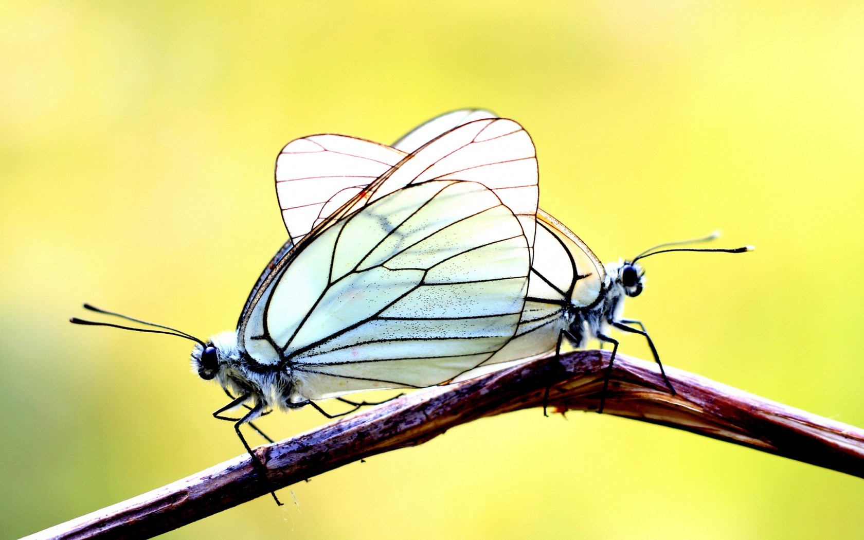 Branch Butterflies Two