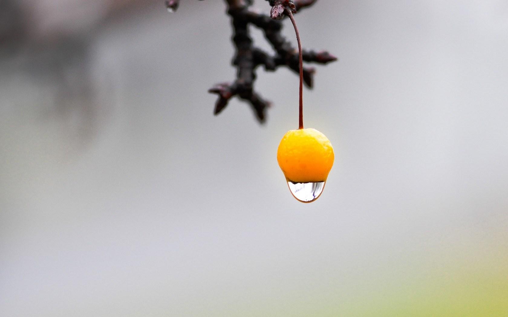 Branch Fruit Yellow Water Drop