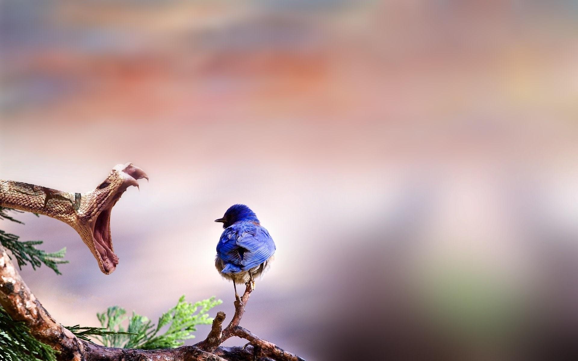 Branch Snake Blue Bird