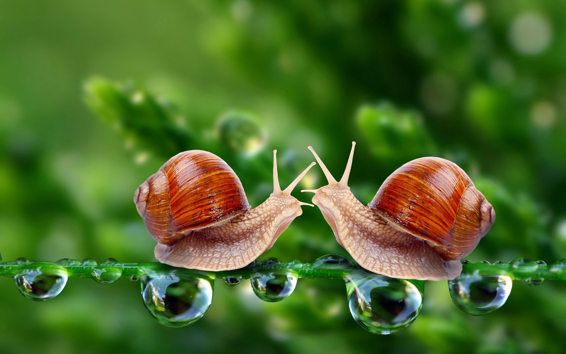 To set this Two-snails-in-love-on-a-tree-branch as wallpaper background on your Desktop, SmartPhone, Tablet, Laptop, iphone, ipad click above to open in a ...