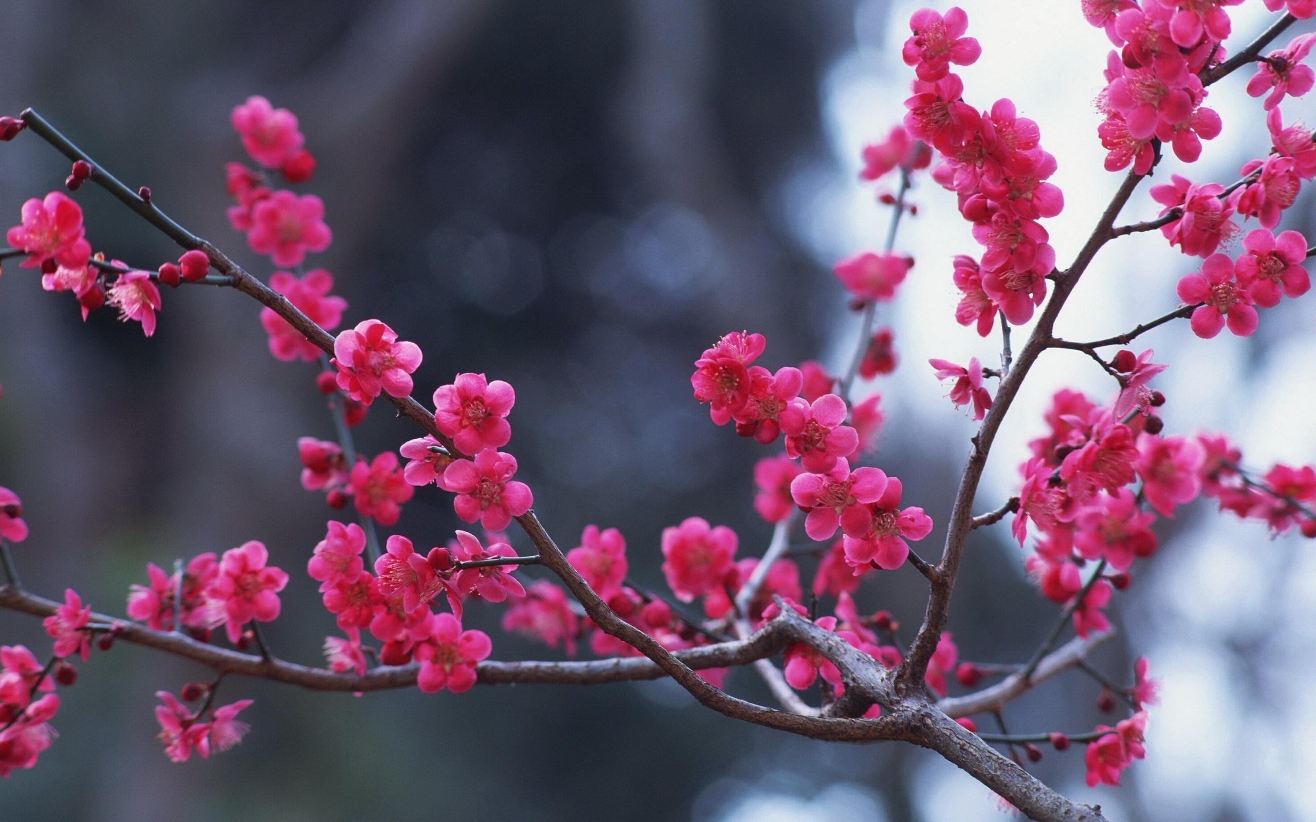 Branches Flowers Pink