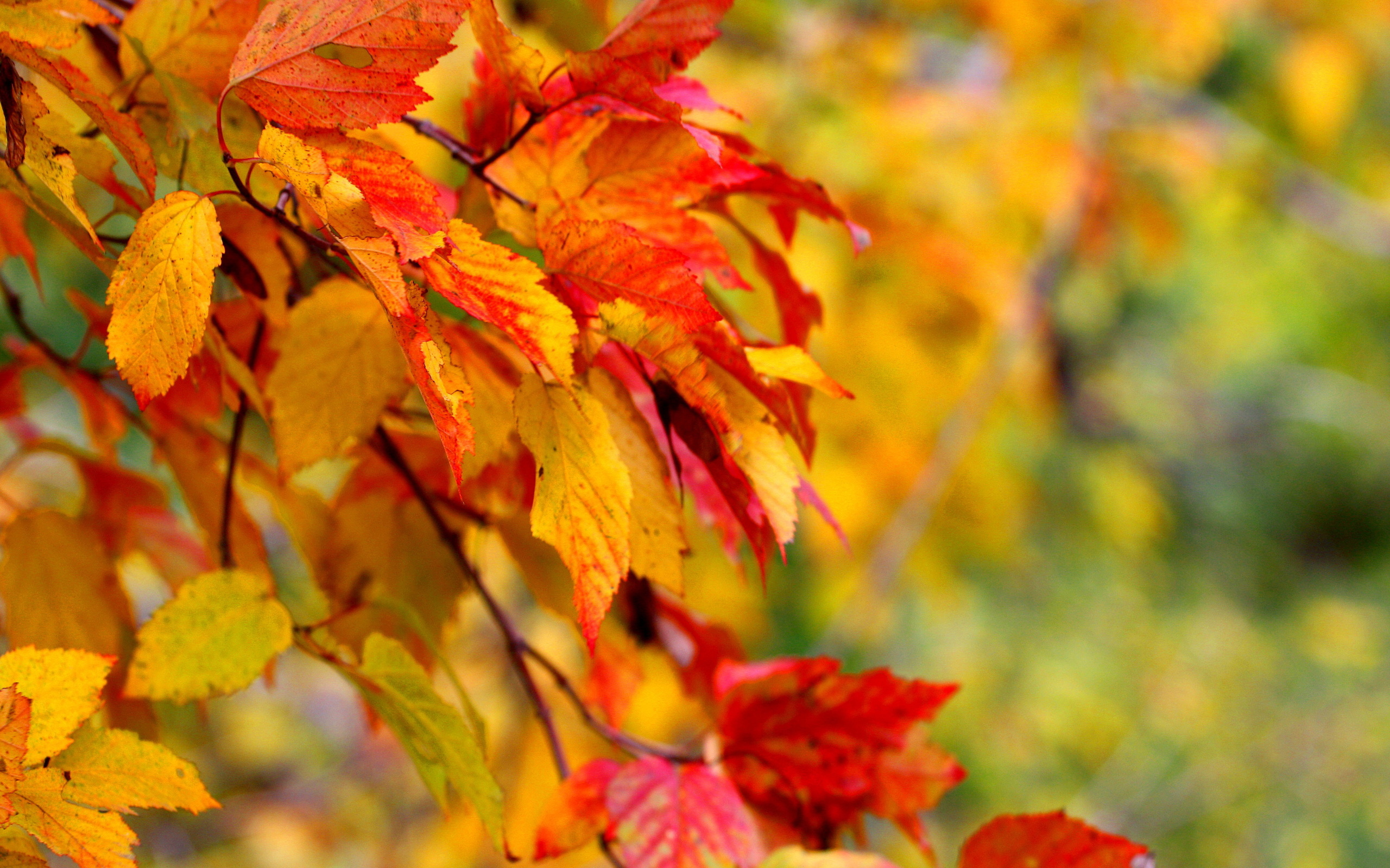 Autumn Wallpaper branch leaf close-up wallpaper background