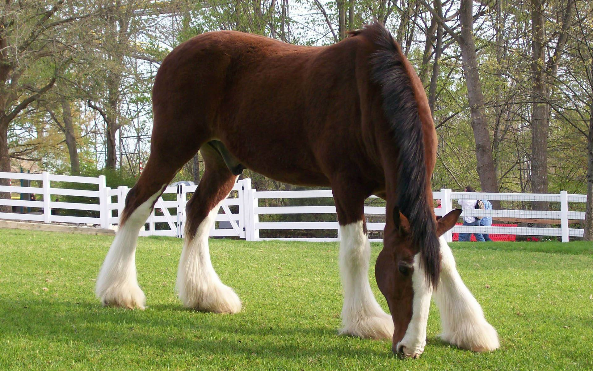 Breyer clydesdale Horse