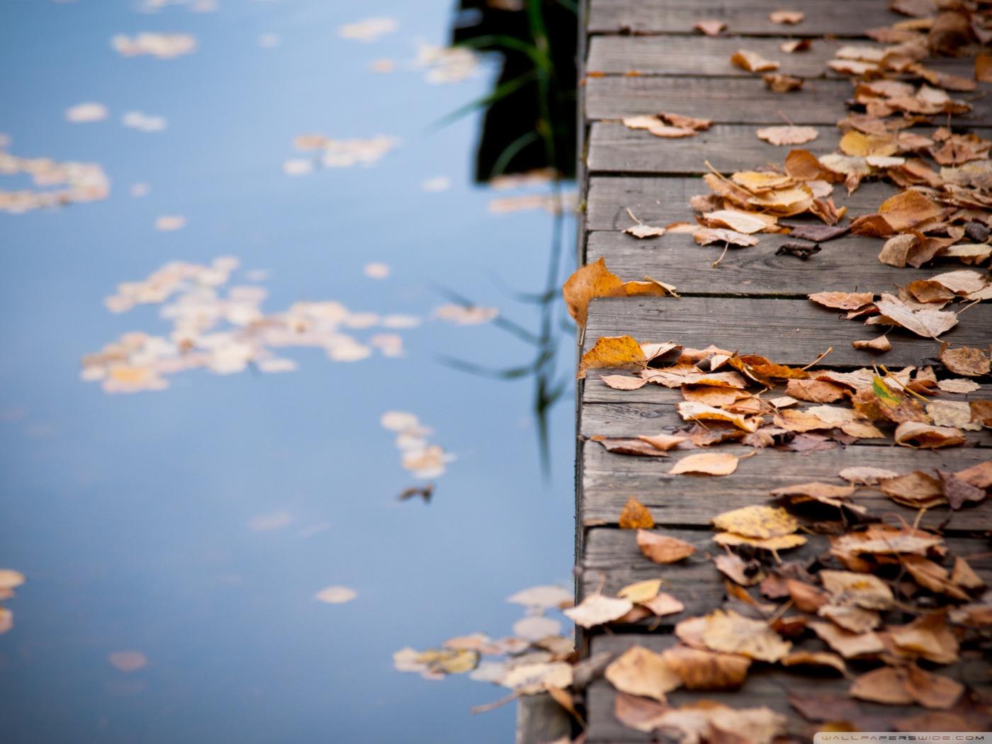 Bridge Leaves Autumn