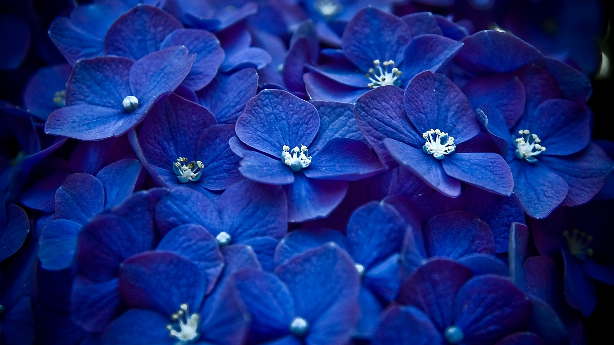Bright Blue Flowers Wallpaper