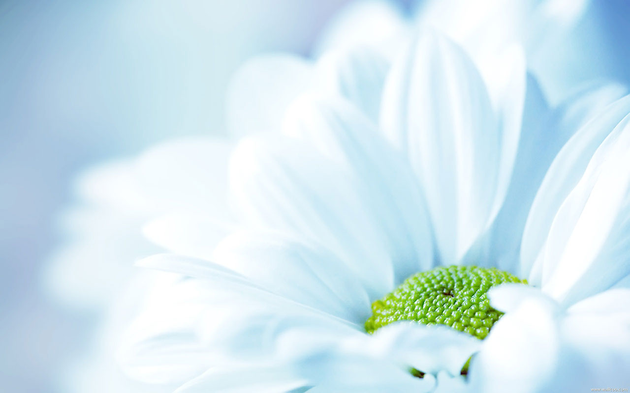 Bright Blue Flowers 4968