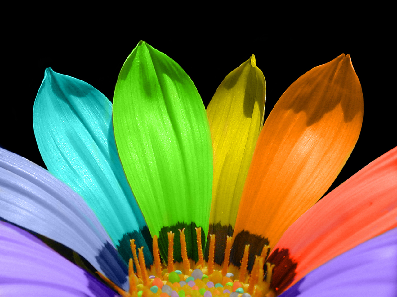 Why are flowers brightly colored?