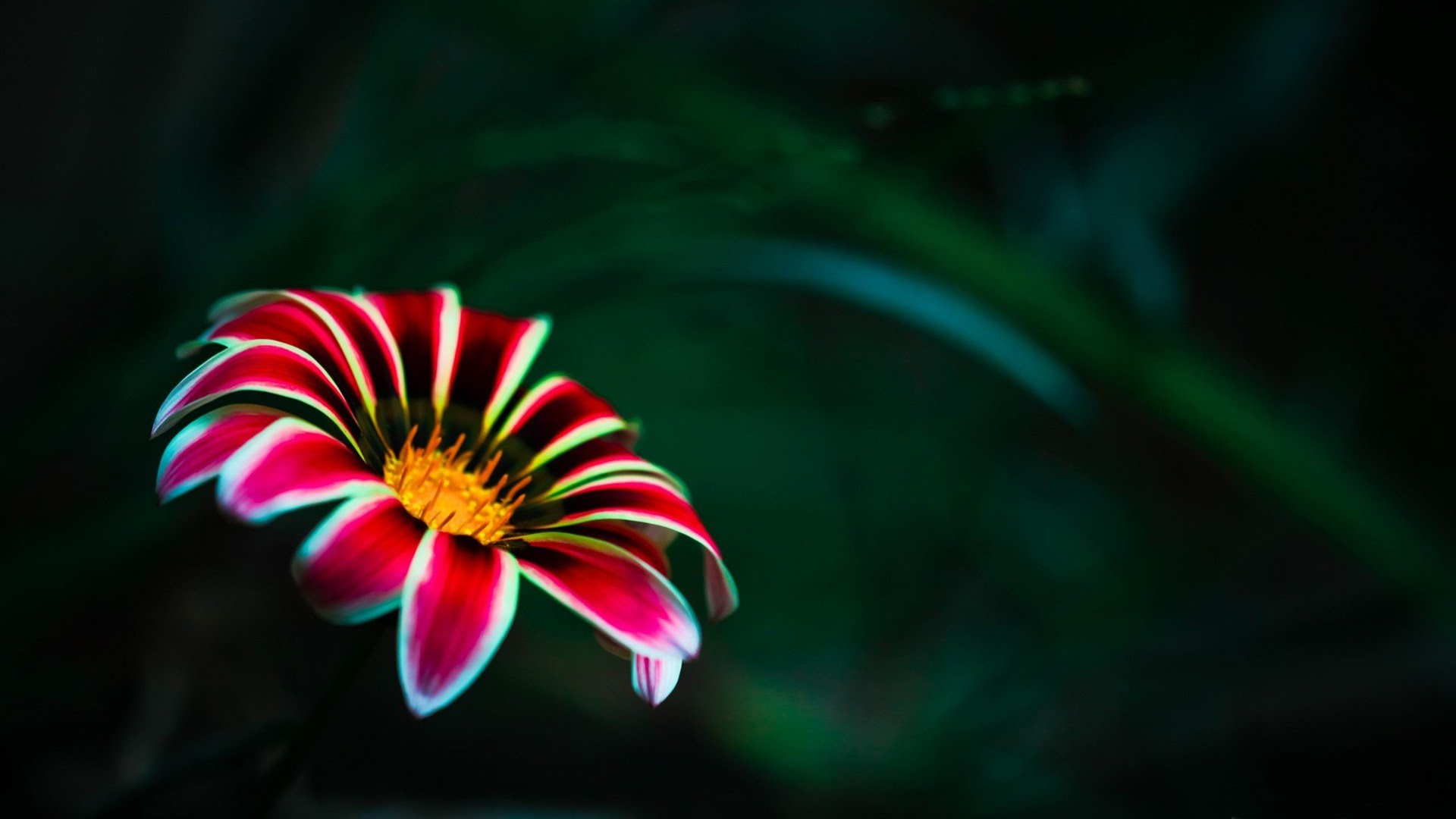 Bright Colored Flowers wallpaper | 1920x1080 | #66301