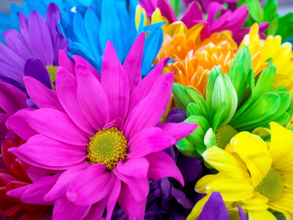 Bright Flowers Best Desktop Backgrounds 12790 High Resolution