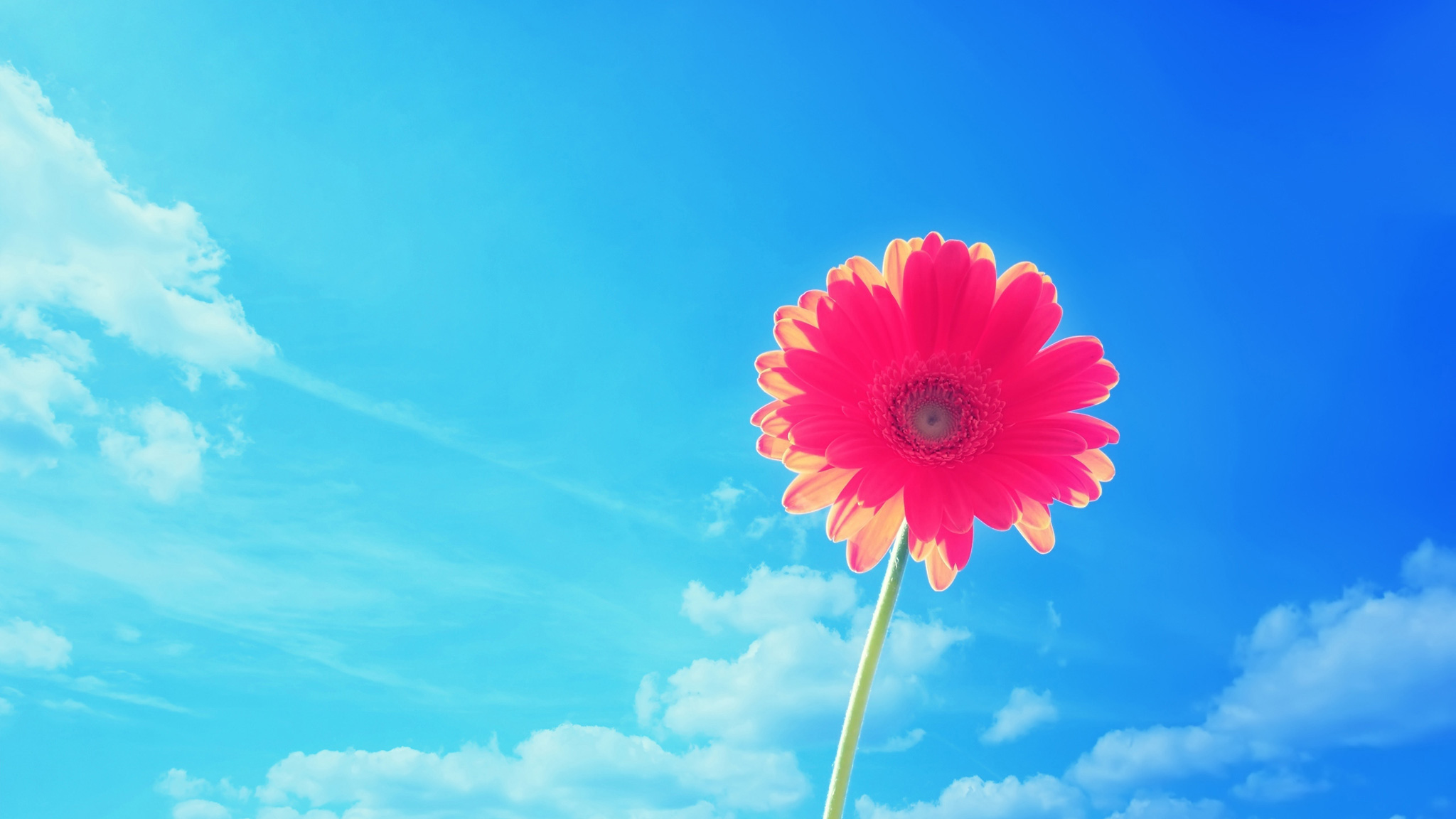 Bright Flowers HD