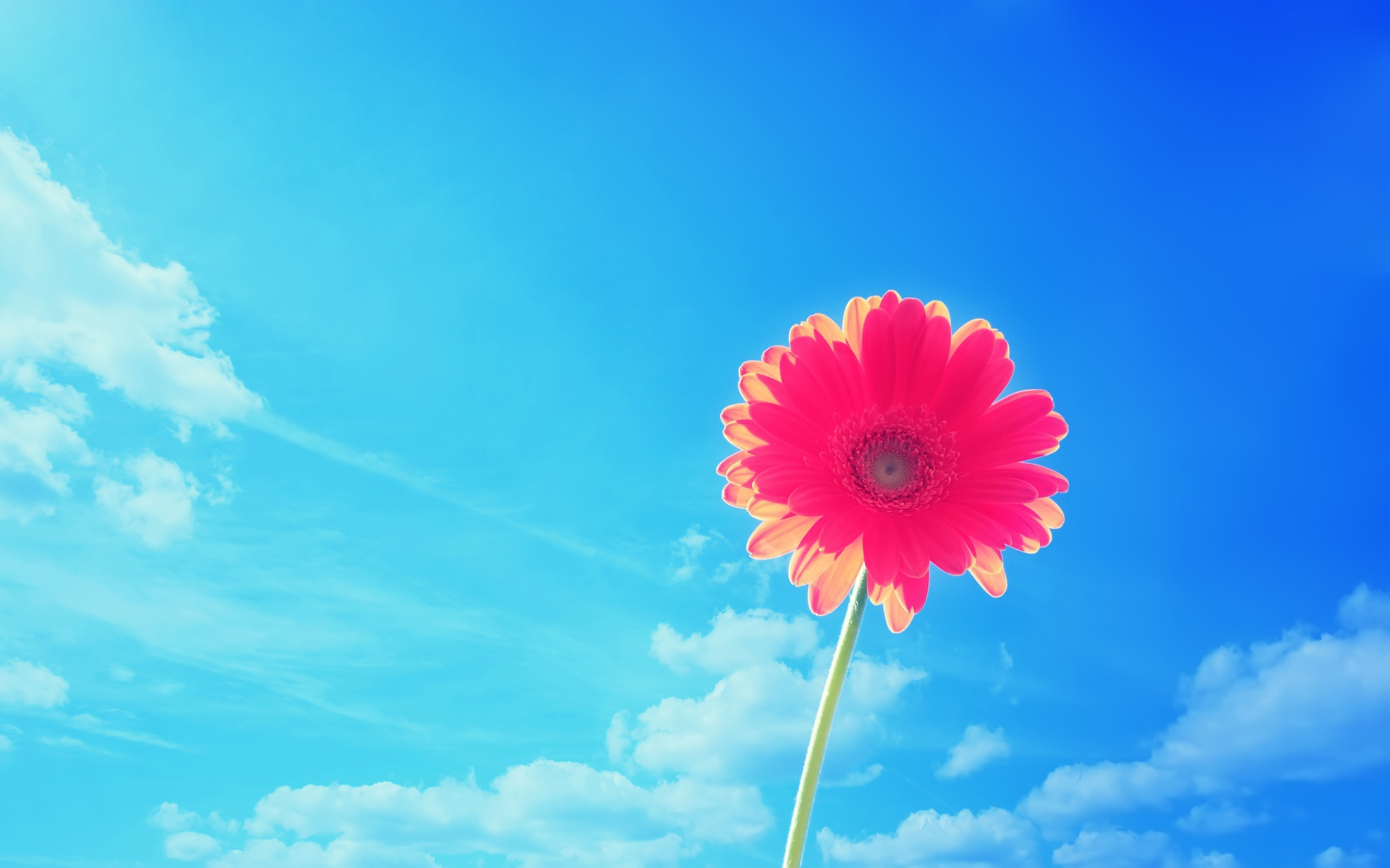 original wallpaper download: Bright flower - 2560x1600