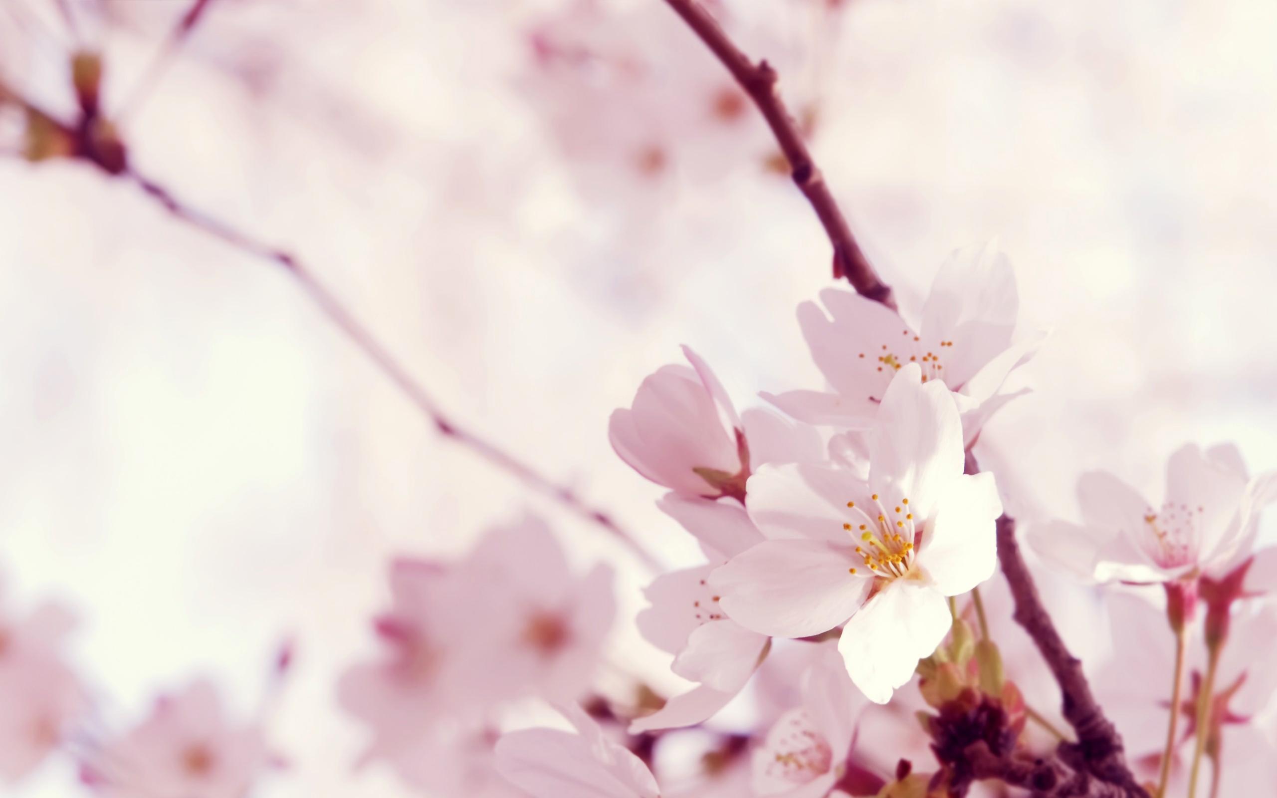 Bright Pink Flowers Wallpaper 2560x1600 73977