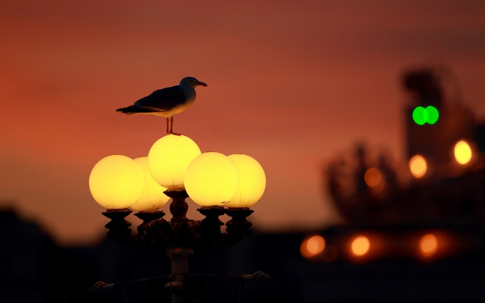 Brighton England City Seagull Lantern Lights Bokeh