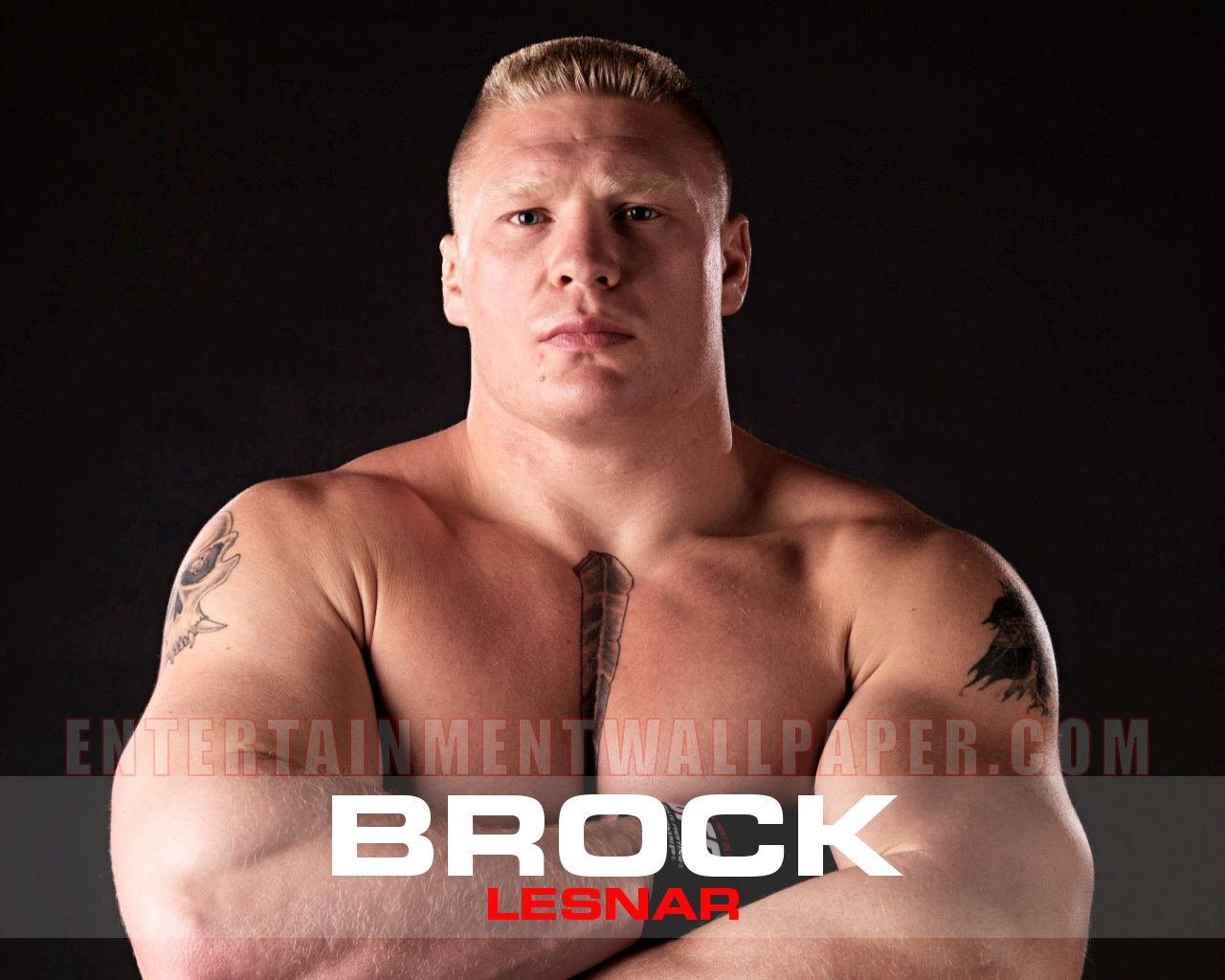 Brock Lesnar Wallpaper HD – 1280 x 1024 pixels – 129 kB