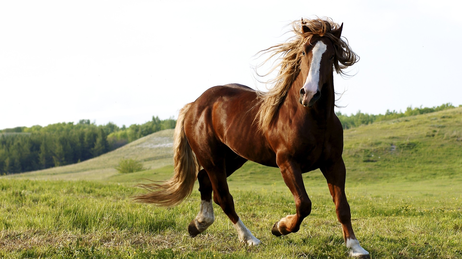 Wallpapers Sports Running Horse Riding Brown Free On The Field Hd 1920x1080px