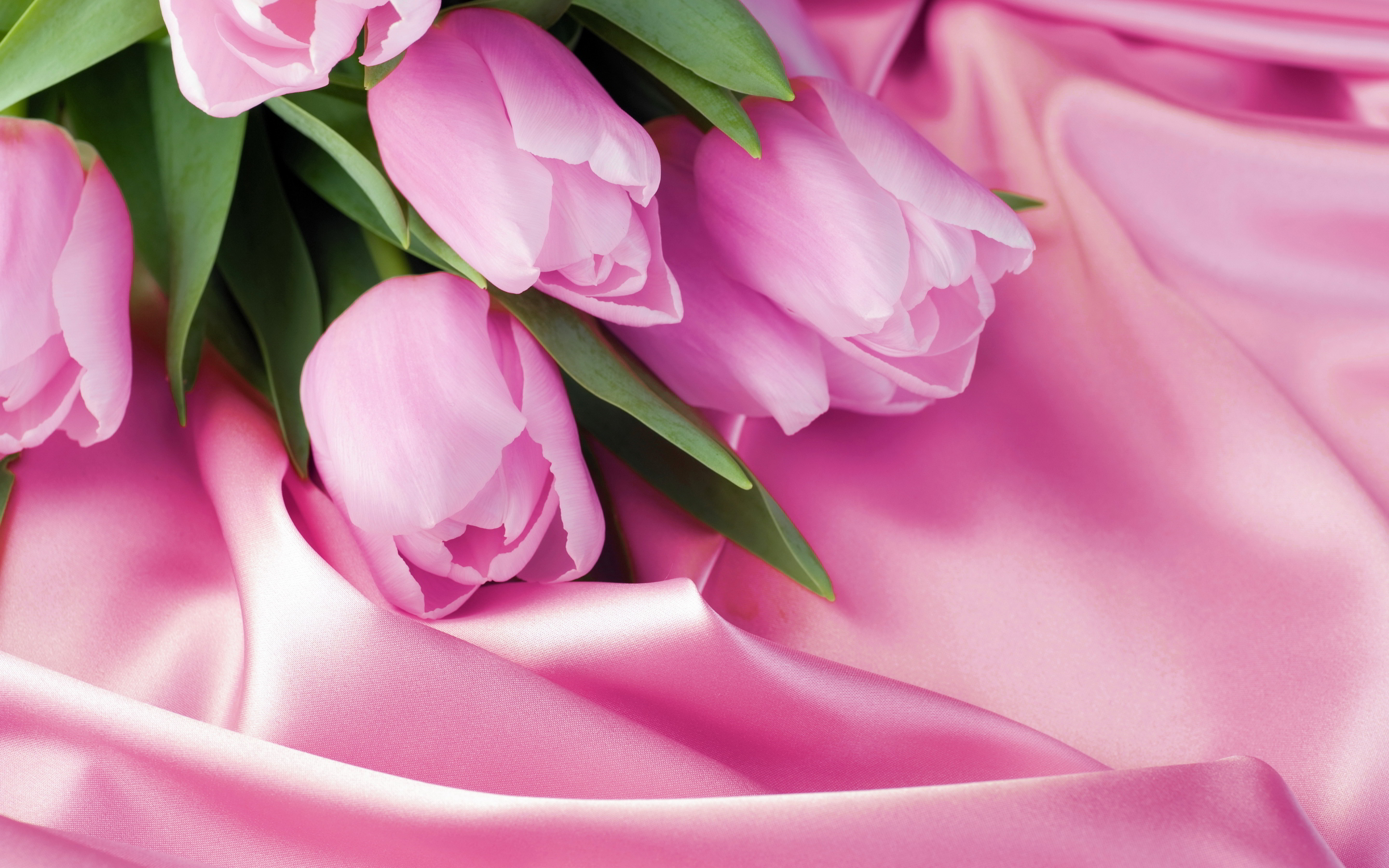 Bunch pink tulips hd