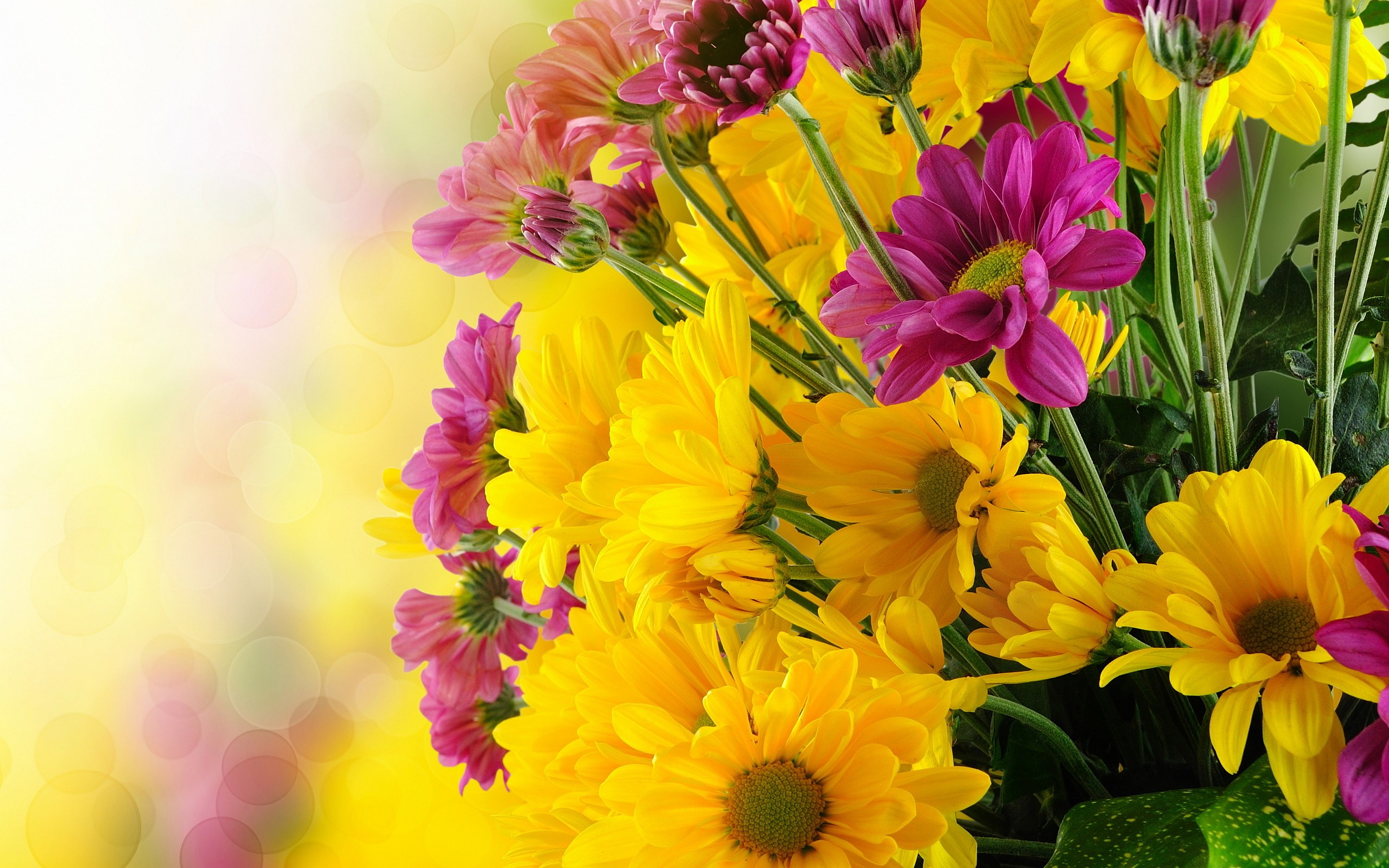 Bunch Pink Yellow Flowers