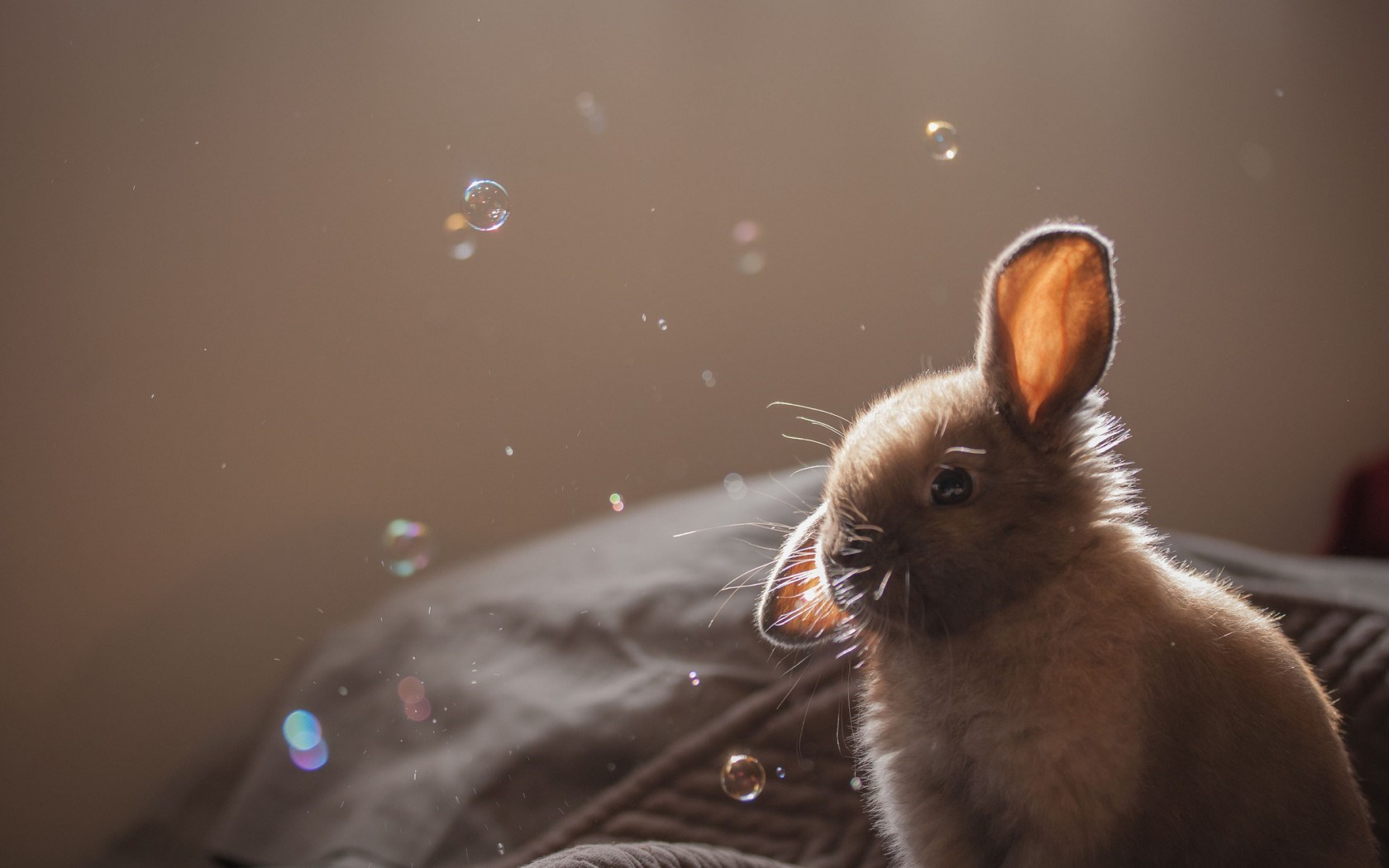 Bunny Gray Soap Bubbles