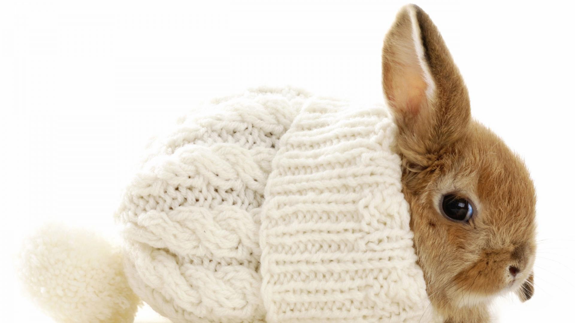 Bunny Rabbit Balaclava