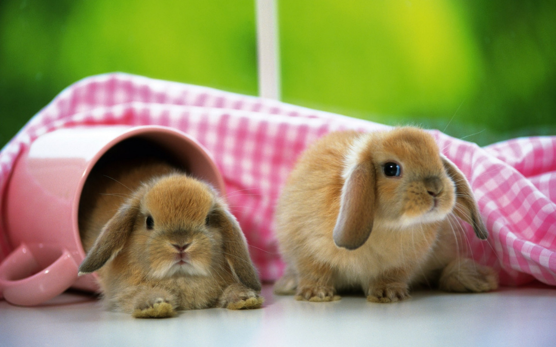 Two Brown Bunny Wallpaper PC Wallpaper