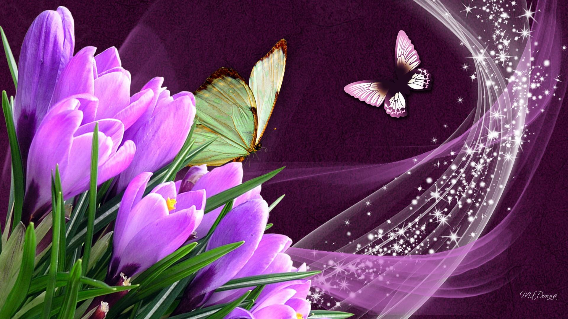 Butterflies crocuses