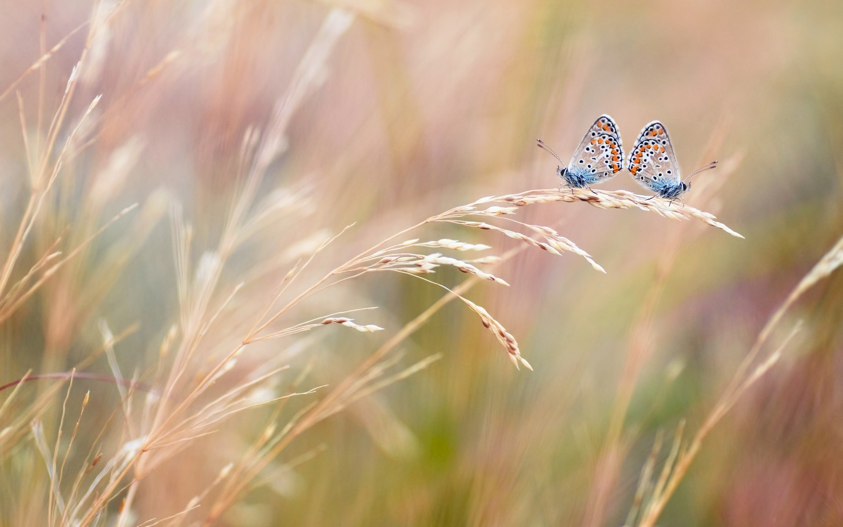 Butterflies Field Close Up