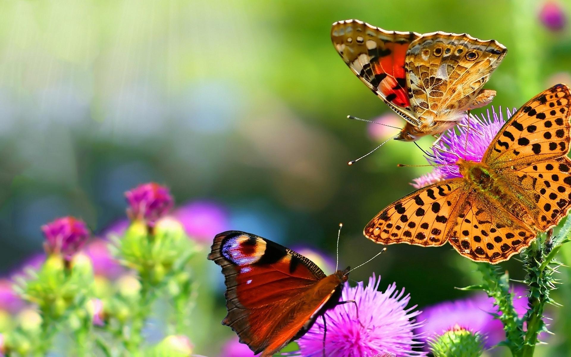 Butterflies flowers