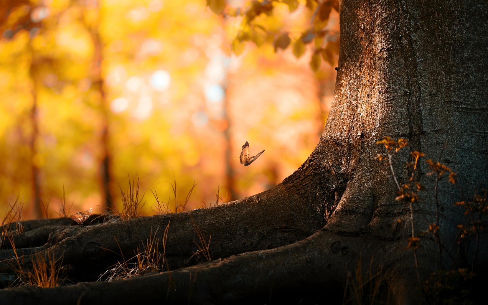 Butterflies Tree Trunk