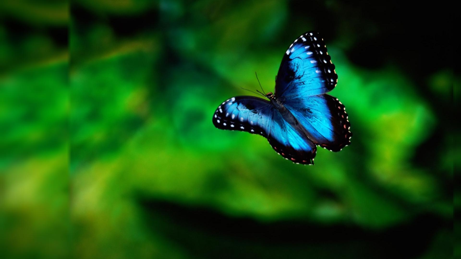Butterfly Wallpaper; Butterfly Wallpaper ...
