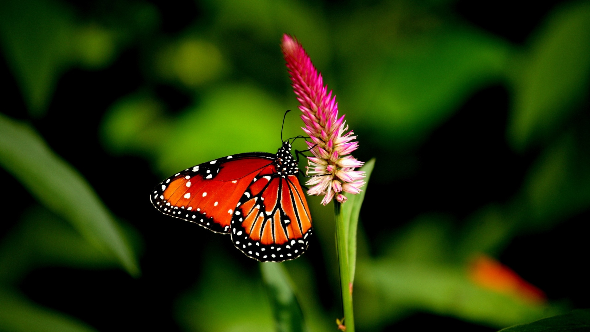 Butterfly and Flower Pictures 22 HD Images Wallpapers