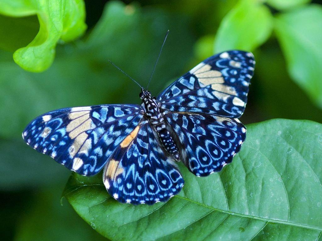 Butterfly - cats-parrots-and-butterflies Wallpaper