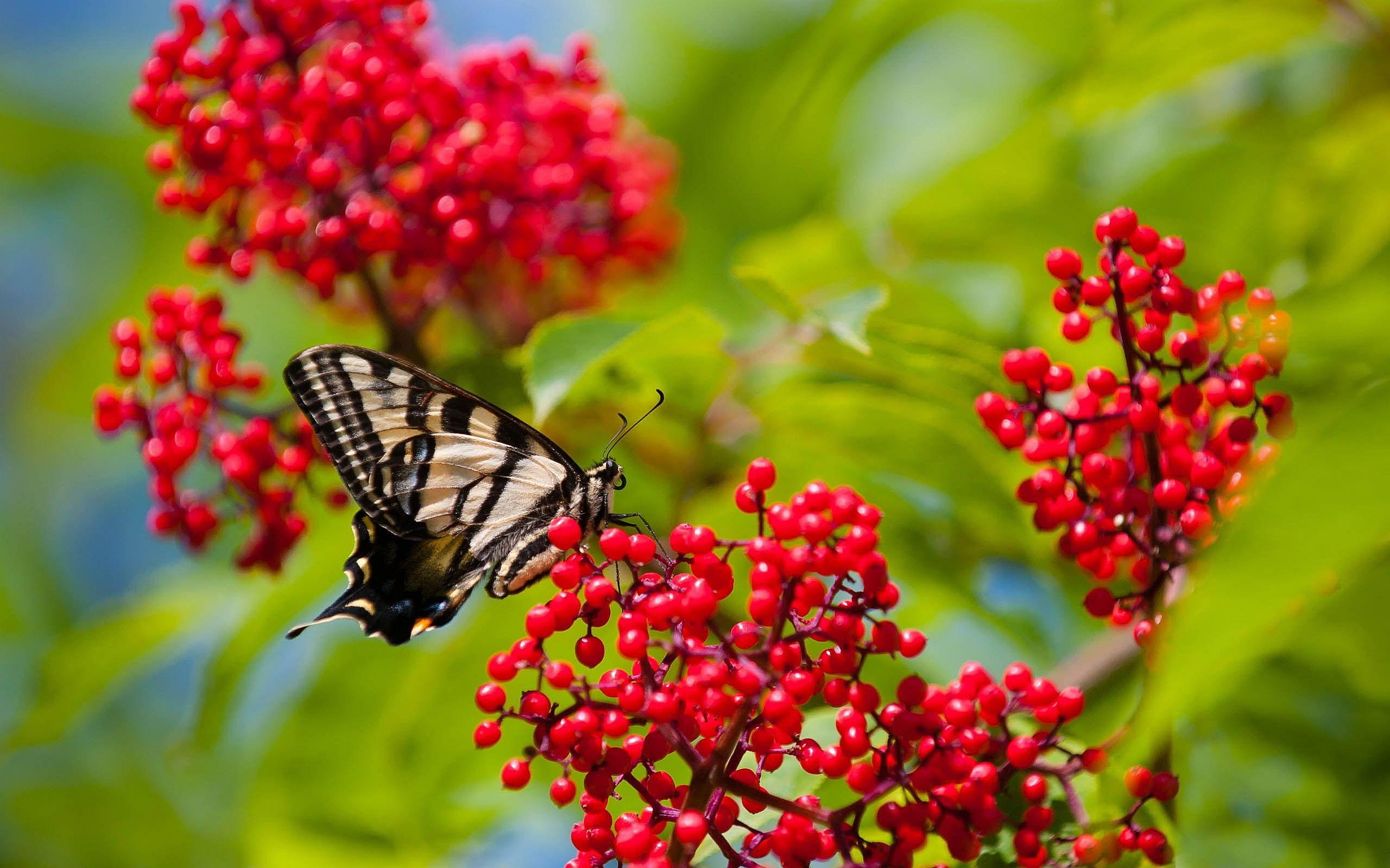 Butterfly Fruits Wallpaper in 2560x1600 Widescreen
