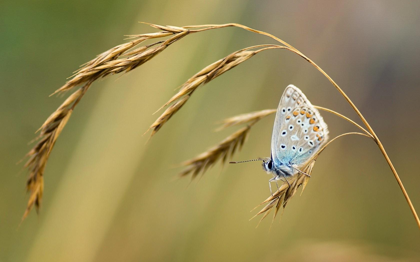 Butterfly Grass Nature Summer