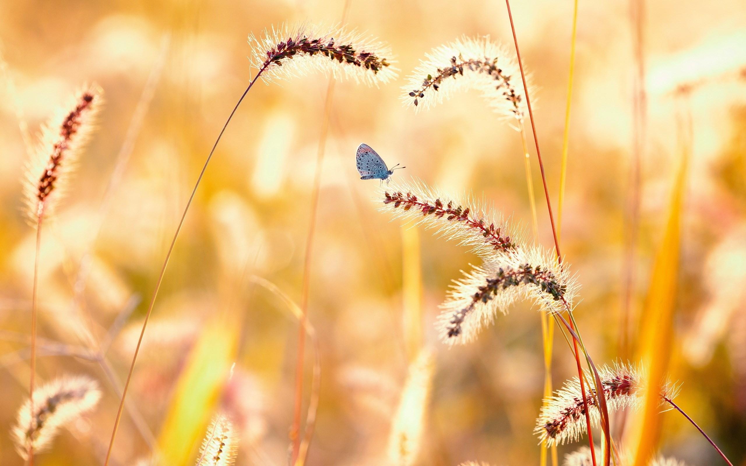 Butterfly summer field