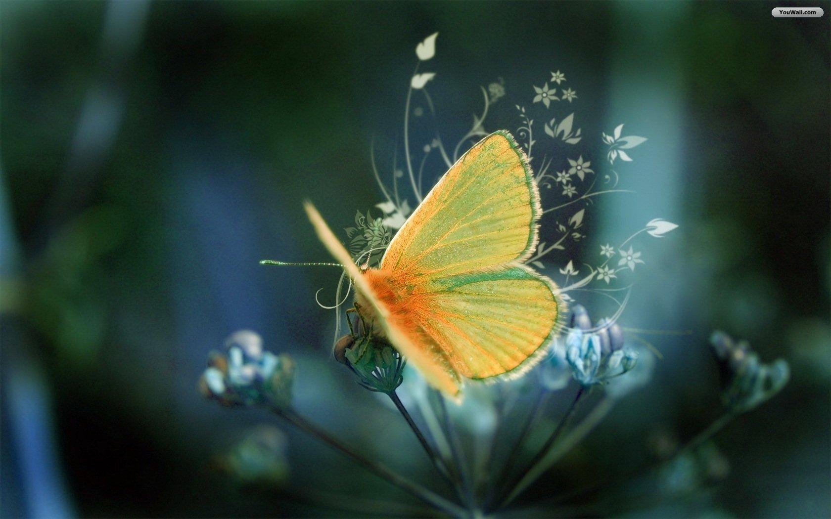 ... Yellow Butterfly Wallpaper 01 ...