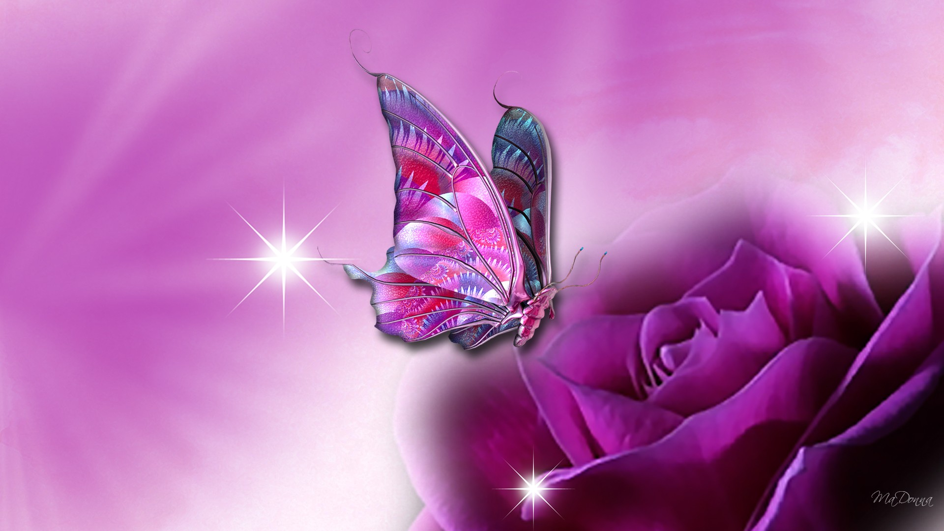desktop butterfly pictures dowload