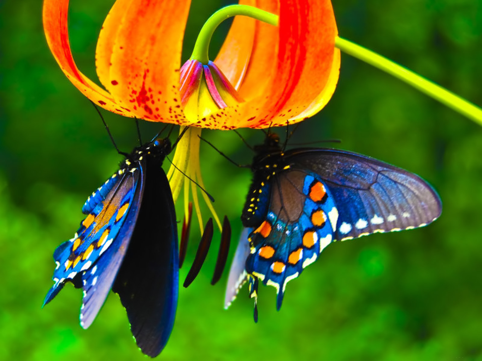 Butterfly Hd Wallpaper 1600x1200 6438