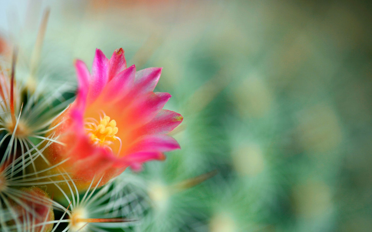 Awesome Cactus Wallpaper