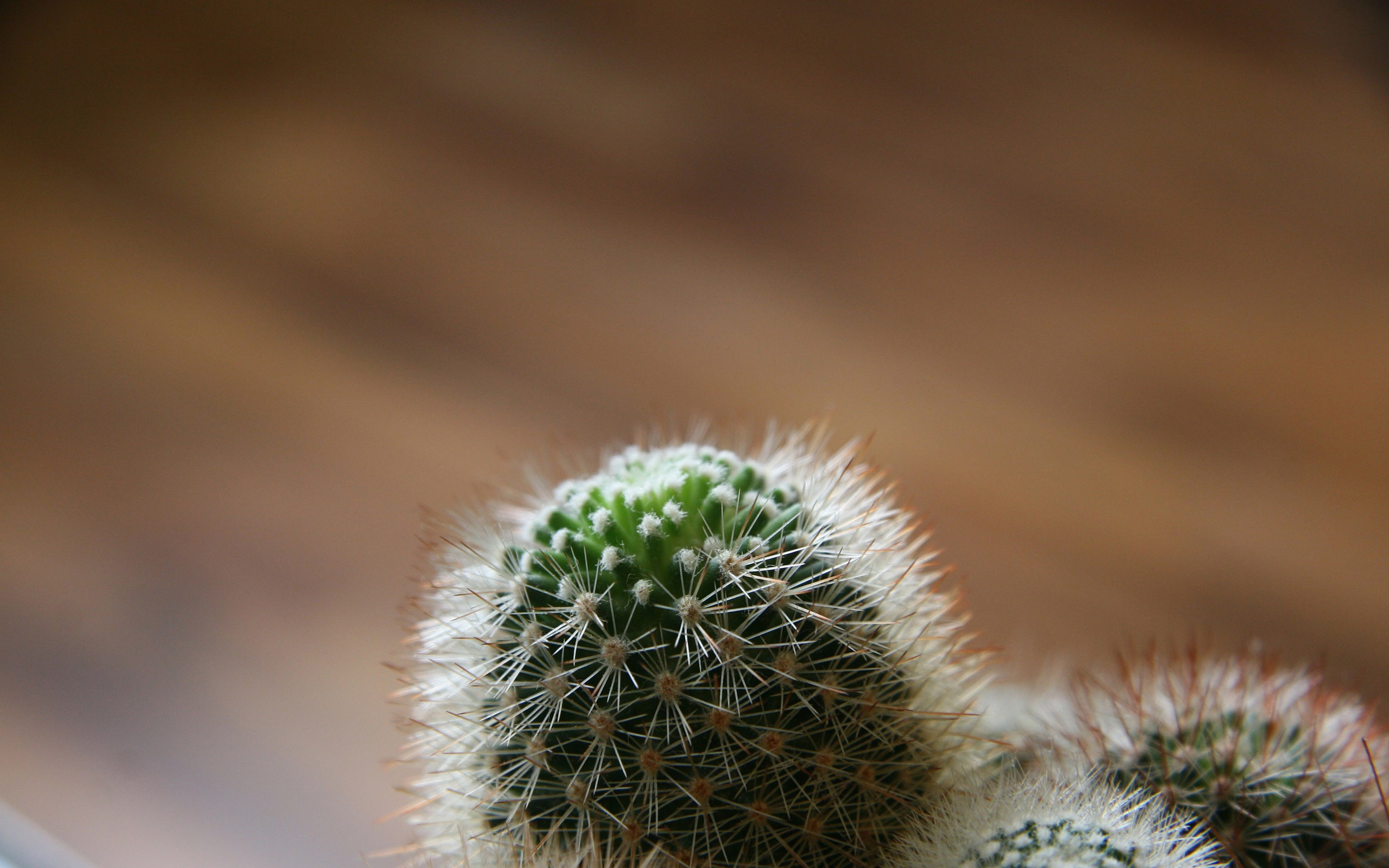 Desert Cactus HD desktop wallpaper : High Definition : Fullscreen ...