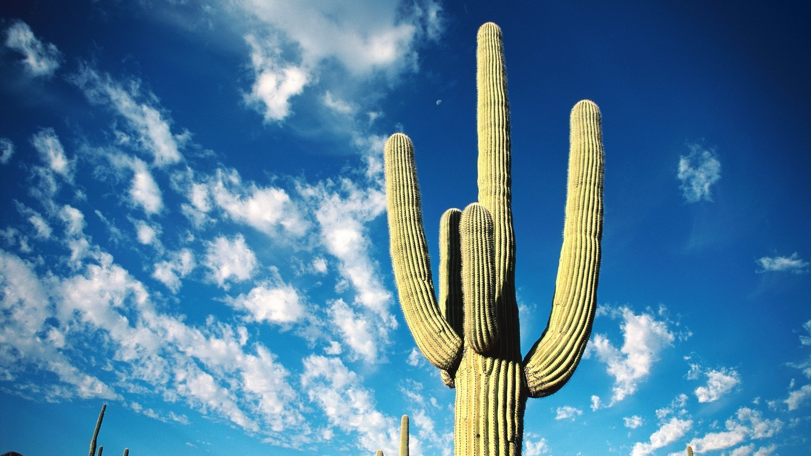 Beautiful Cactus Wallpaper