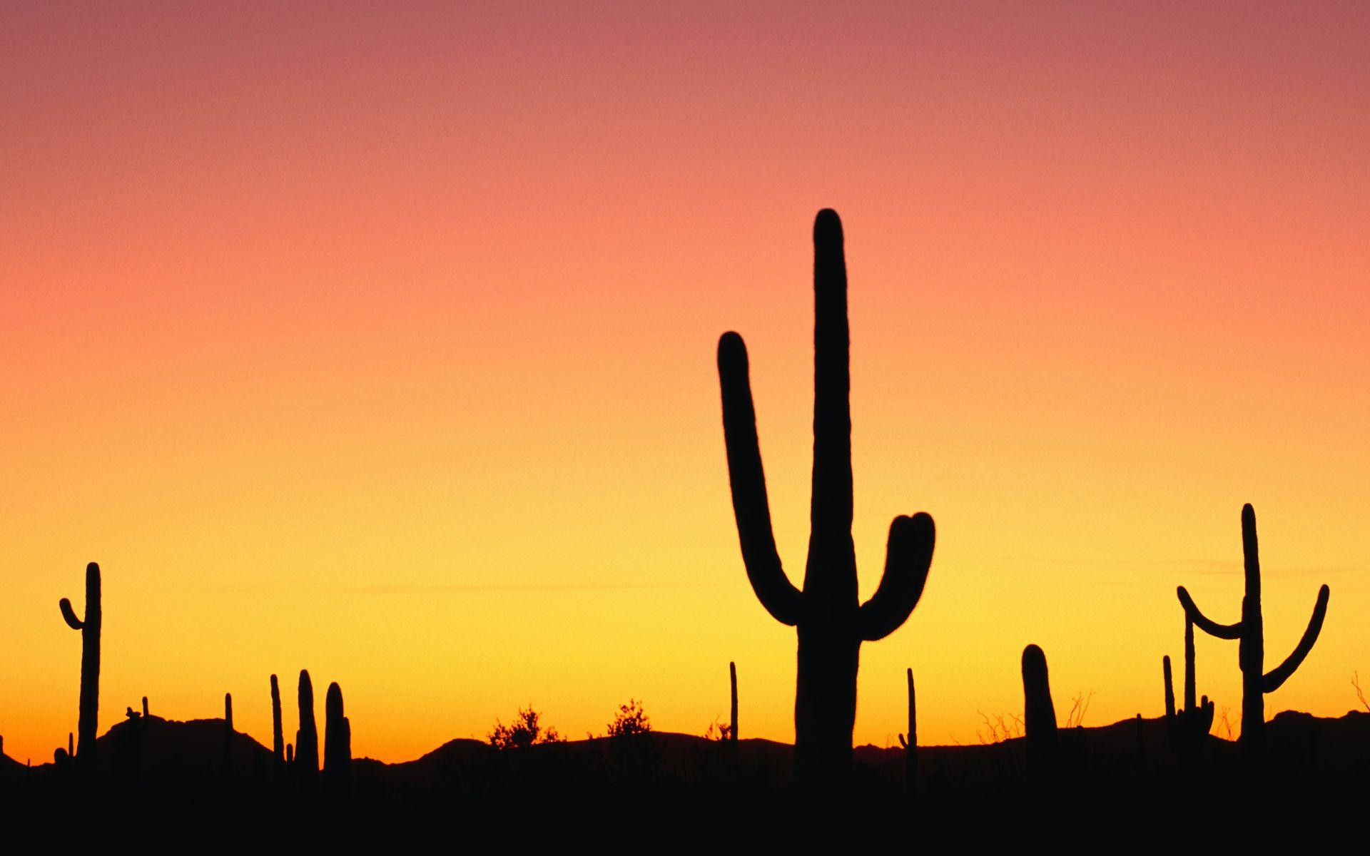 wallpaper cactus sunset winter background images sunsetcactus