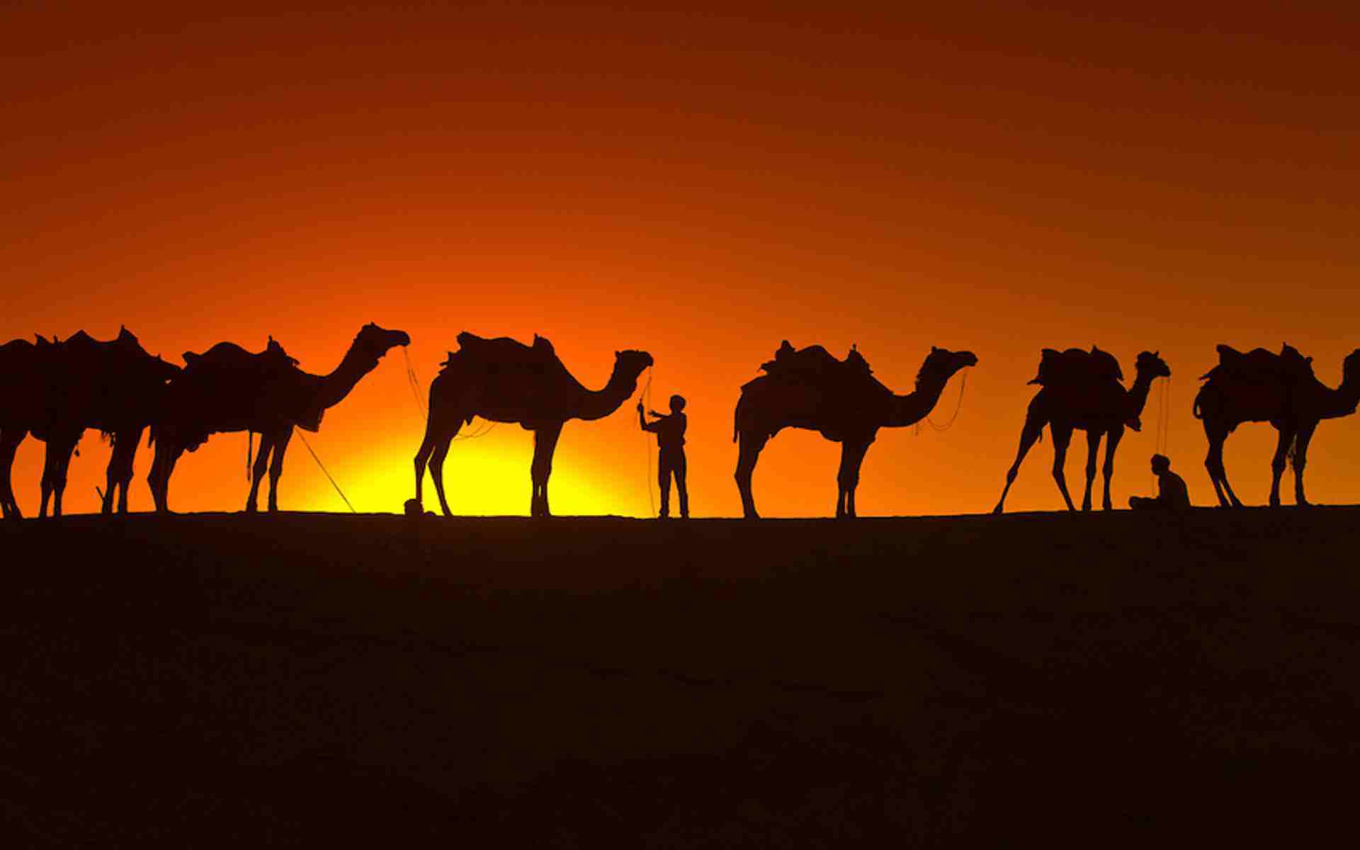 DOWNLOAD: Camel Wallpaper free picture 2560 x 1600